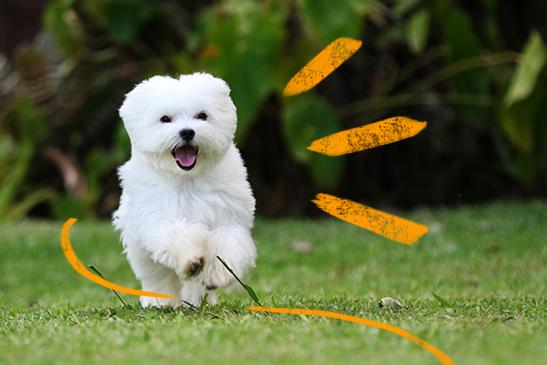 cachorro-comando