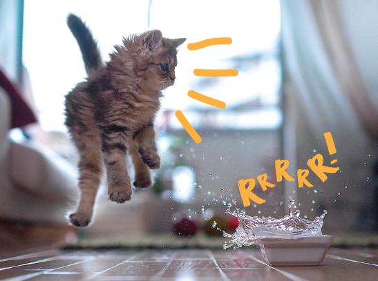Por que os gatos têm medo de banho?