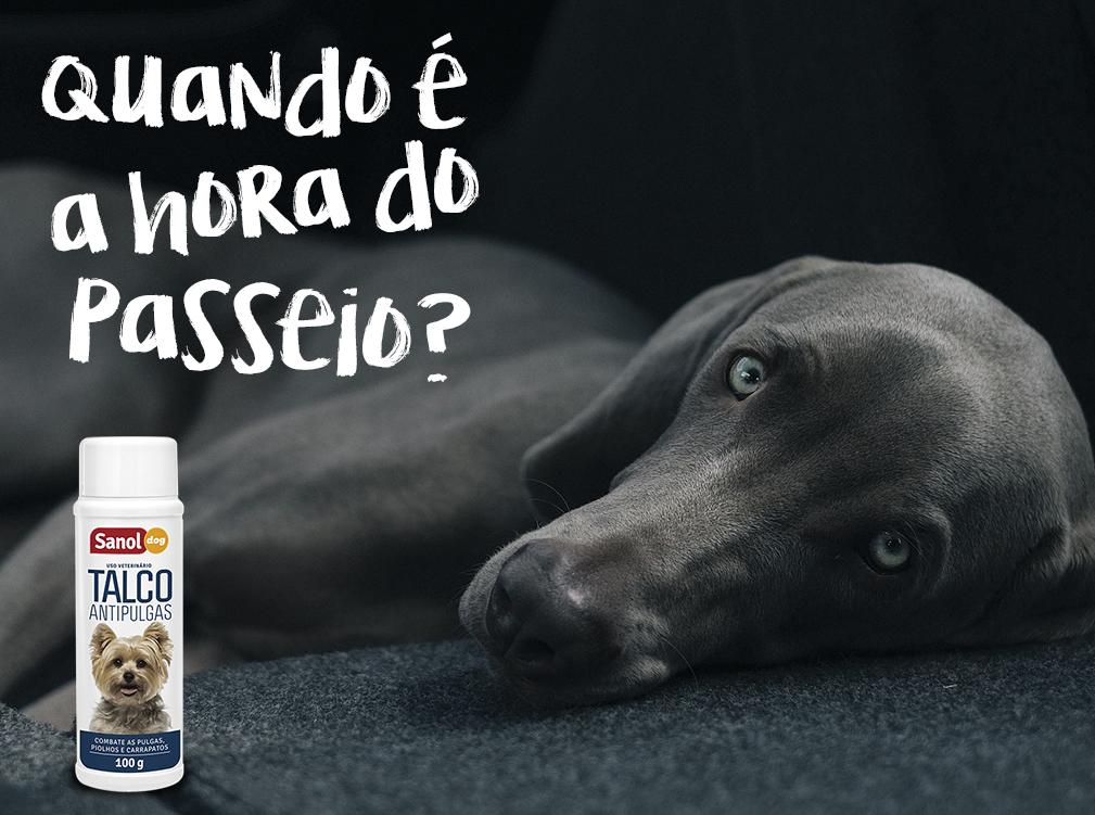 Seu cachorro fica o dia inteiro sozinho? Conheça algumas soluções para deixar ele ativo e feliz.