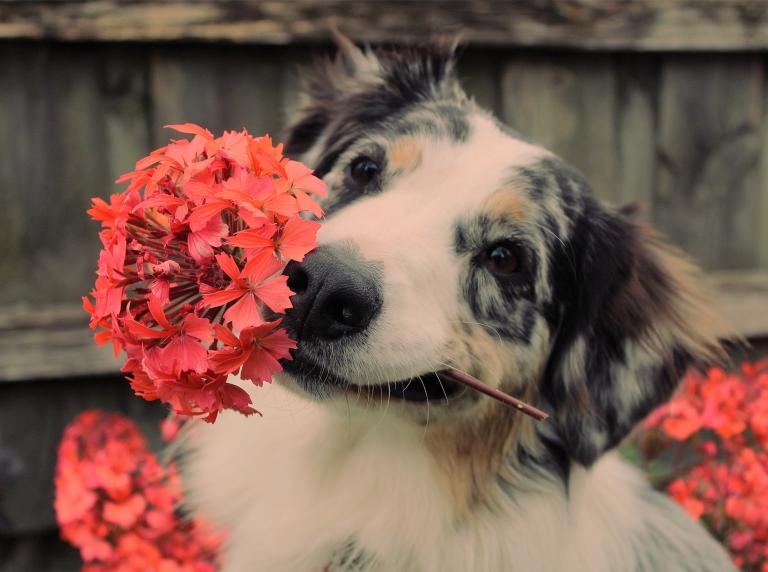 Cuidados para se ter com o seu pet na Primavera