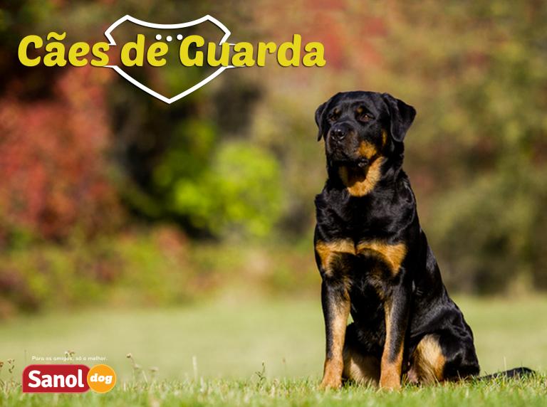 As melhores raças de cães de guarda do Brasil