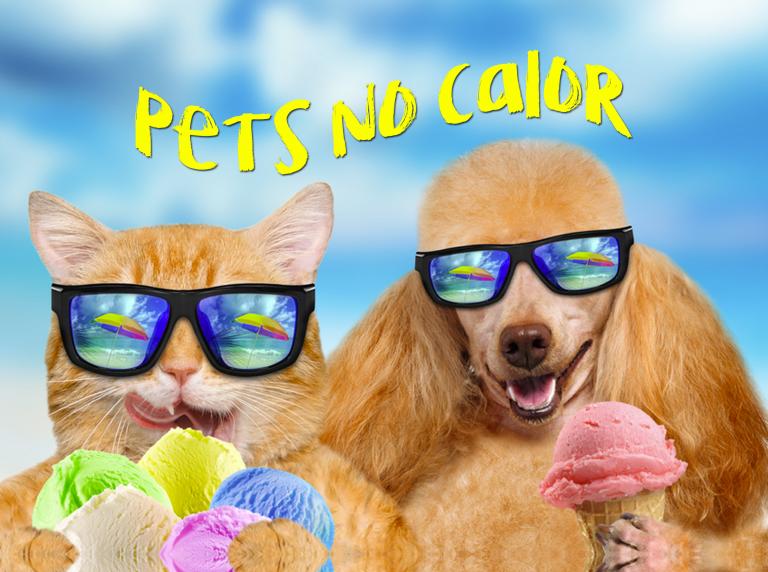 Dicas para curtir o verão com seu cão