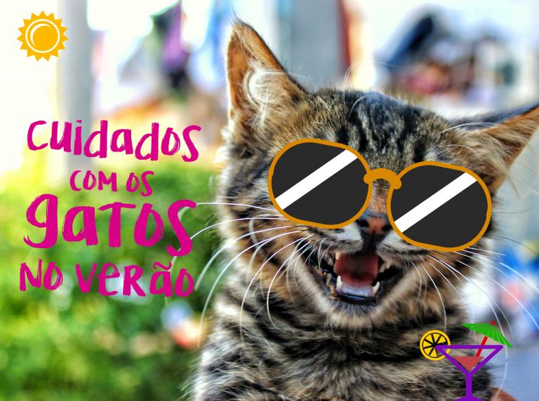 Cuidados com os gatos no verão