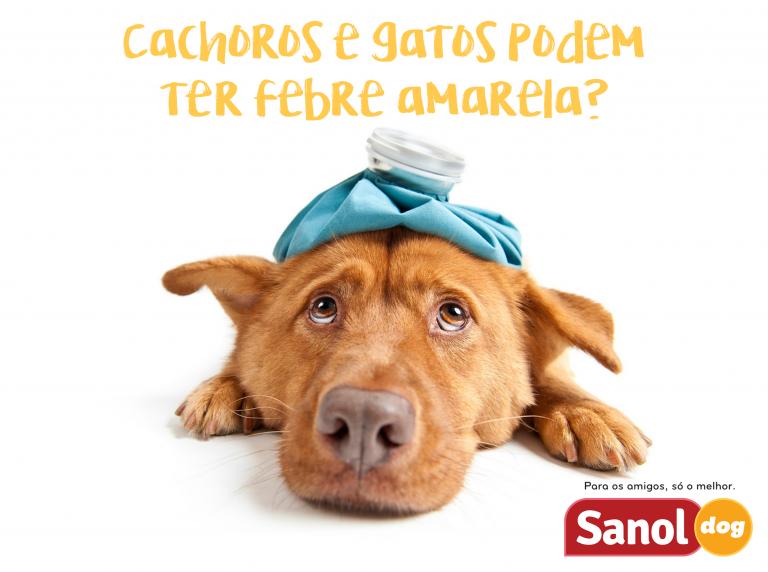 Cachorros e gatos podem ter febre amarela?