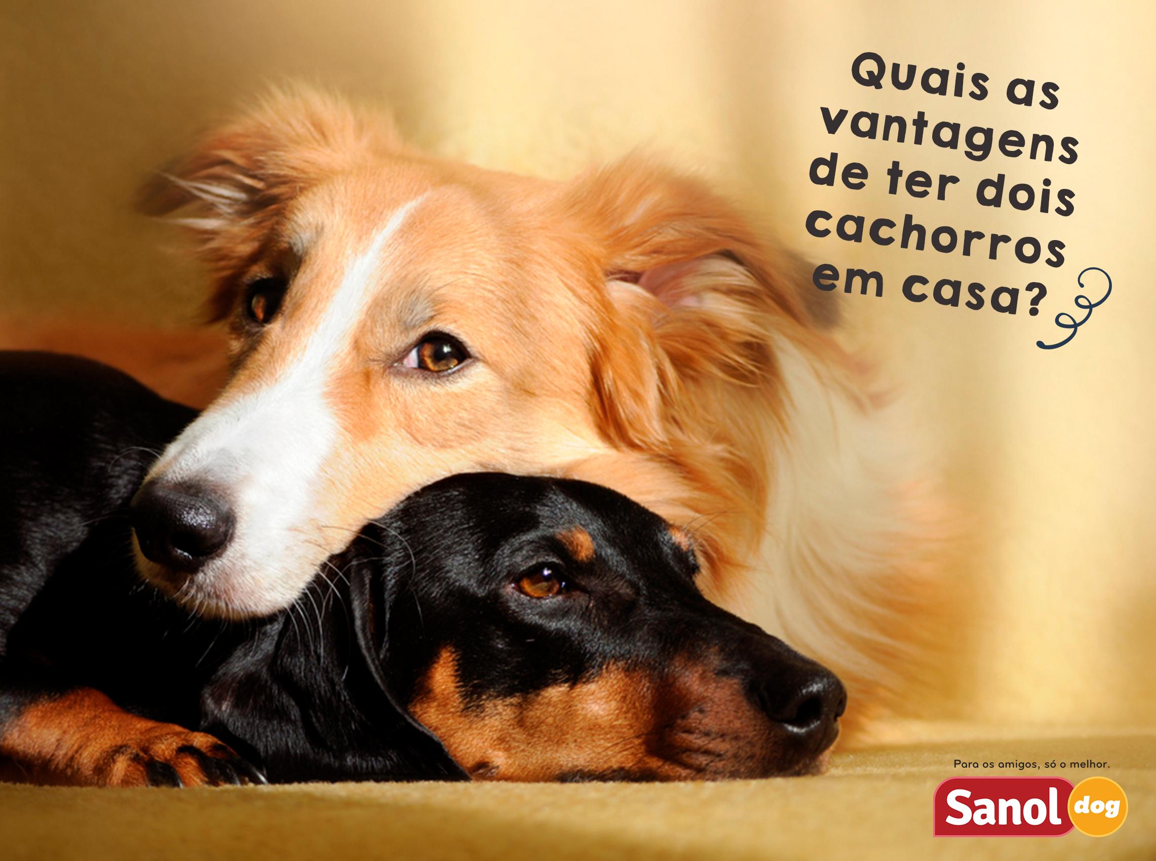 57e06d15cf Blog - Página 4 de 15 - Sanol Dog